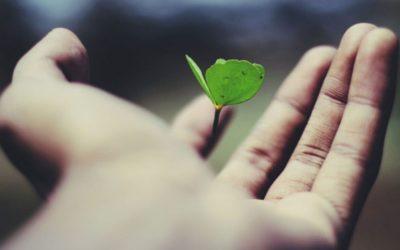 La vida orgánica sobre la tierra